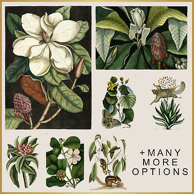 VINTAGE PRINTS: Botanical Plants, Flower, Animal A4 A3 A2 A1 Wall Art Poster