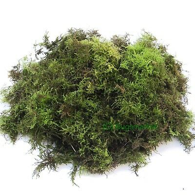 Live Moss (Loose) - Size 1.5L to 10L - terrarium, reptile, frogs, substrate,