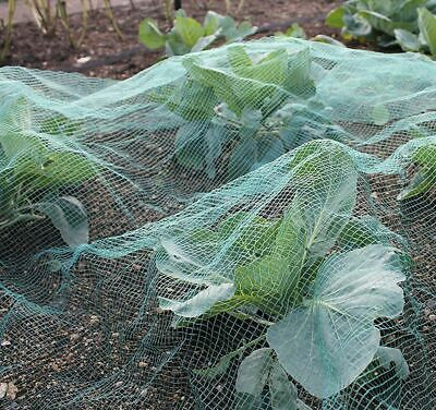 Green Soft Butterfly Protection Netting Crop Veg Garden Anti Bird Multiple Sizes