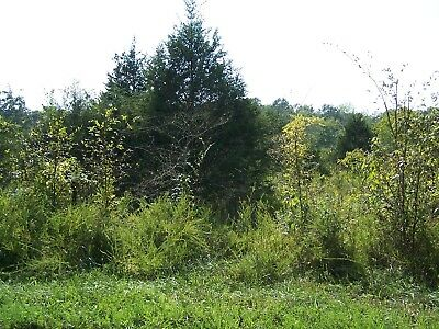 1/2 acre lot in Horseshoe Bend, AR - Golf Course Lot near lake. Very nice lot!