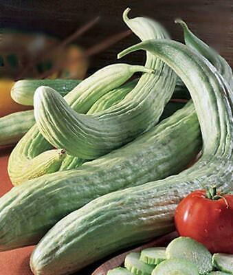 Armenian Yard Long Heirloom Cucumber Garden Seed Non-GMO