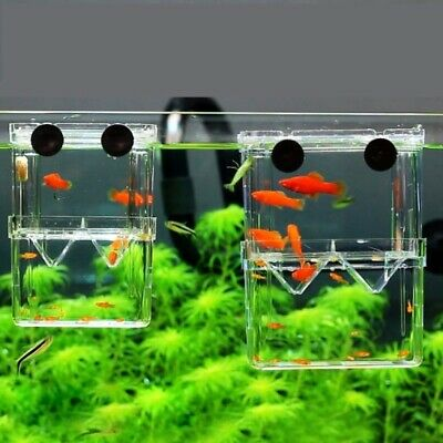Acrylic Fish Isolation Breeder Box Tank Aquarium Hatching Incubator Pet Supplies