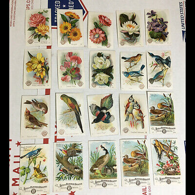 20 antique 1900s Arm & Hammer Chromolithographed Trading Cards FLOWERS & BIRDS