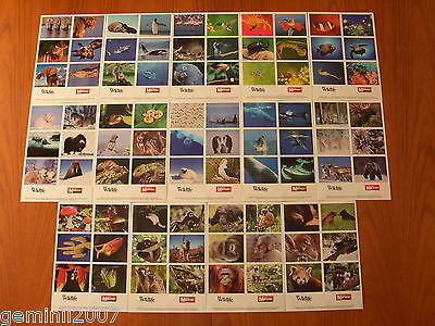BBC WILDLIFE Animal Stickers Sets - Lion Elephant Bear Shark Monkeys Lizards NEW