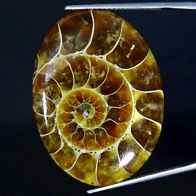 44.90Cts Natural Ammonite Fossil Oval Cabochon Loose Gemstone