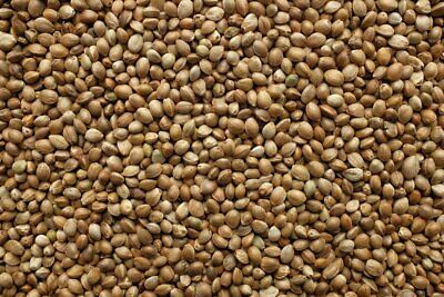 Organic Hemp Seeds RAW VEGAN FOOD CANABIS SEED BIO 2 1 kg 1 LB -450 Grams