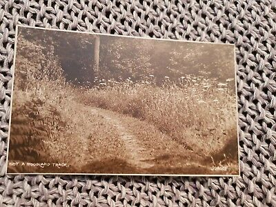 A Woodland Track - Vintage Real Photo Postcard