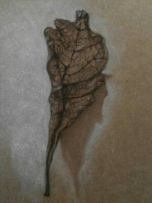 Art Drawing Wilted Dry Leaf Sepia Chalk Brown Paper Original A4 Botanical Art
