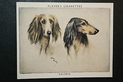 SALUKI   Superb Vintage Twin Portrait Card   CAT A