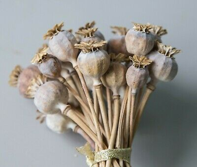 25 English Dried Flower Seed Heads - Floral Design/Crafts from Sussex garden