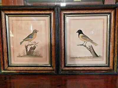 A Pair Of Antique Bird Prints In Antique Frames As Found.  Black Predominate Col