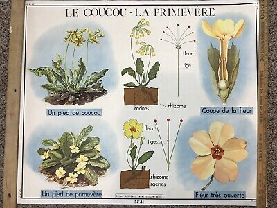 Rare Vintage French School Chart Poster Flower Botanical Birds Wall Art