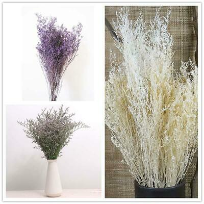 1 Bunch Natural Dried Flowers Bouquet Flower For Home Party Decor Craft Gift