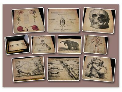 10 Options Ancient Art Weird Print Oddity Occult Antique Effect Demon Curio