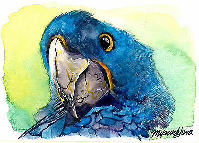 "ACEO 2.5""x3.5""-Hello, WATERCOLOR PARROT ART PRINT, Cute bird painting"