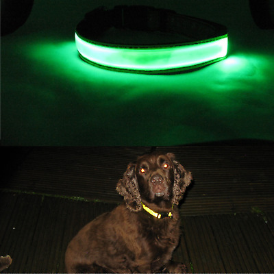 B&C Hi Visibility Dog Collar Hi Viz Yellow Reflective strip with or without LED