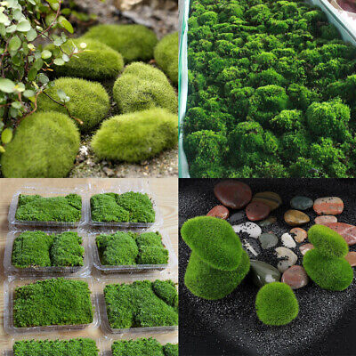 Moss Aquatic Plants Fish Tank Bonsai Water Grasses Plants Living Plant Aquarium