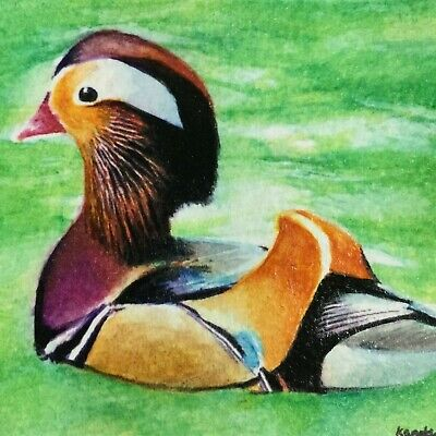 Painting drawing art original ACEO mandarin duck mini hand tiny picture bird new