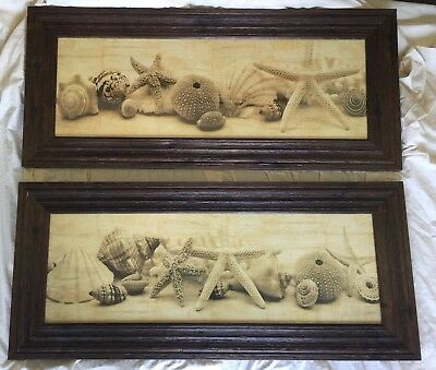 Pair of Shell Collection Art Prints