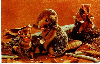 """""""Naggy' the Busy Beaver and Friends at Work, Steiff Zoo Favorites- Postcard"""