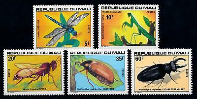 FM Central African Rep #j01 Fruit Beetle Eudicella nyassica real insect SETx1 A