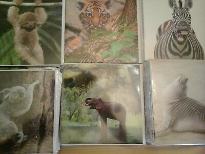 25 Caught On Camera Cards, Wholesale Joblot Greeting Cards