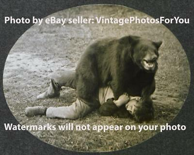 Antique Vintage Old Odd Weird Strange Funny Humorous Bear Attack Photo Picture