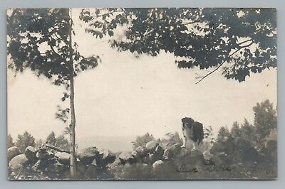 """Our Dog"" Stone Wall RPPC Phillips Maine UDB Antique Photo Franklin County 1906"
