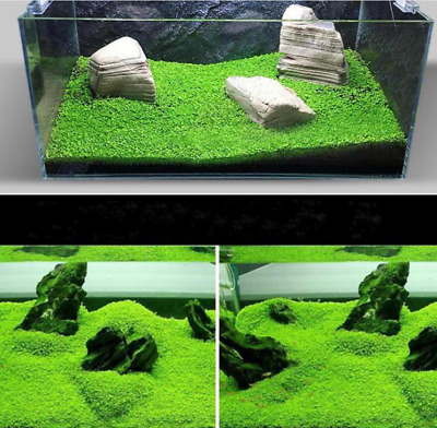from 48h Delivery! Fish Tank Aquarium Plant Grass Seeds NEW!