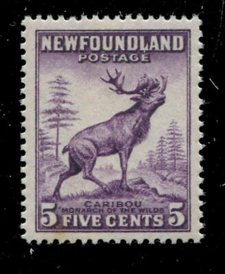 Newfoundland 191a SG  MNH VF 5c 1932-37 Issue [N3578] CV=$30.00