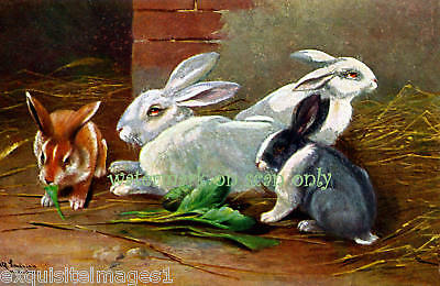 Antique Art~Four Colored Rabbits ~NEW Lge Note Cards