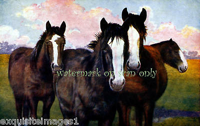 Antique Art~Four Horses~White Blazes~NEW Lge Note Cards