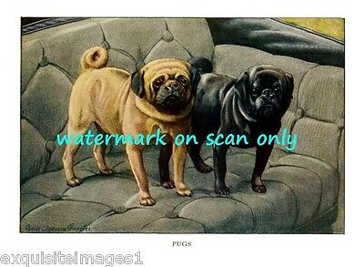 1919 Artwork~Fawn & Black Pug Puppy Dogs on Chair~NEW Large Note Cards