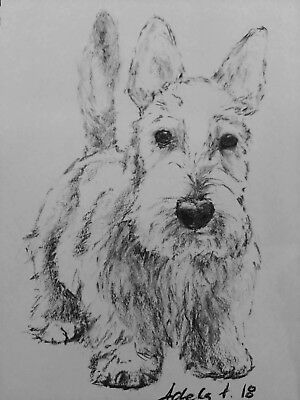 Charcoal Dog Drawing Original Art A4 Scottish Terrier Pet Sketch Portrait