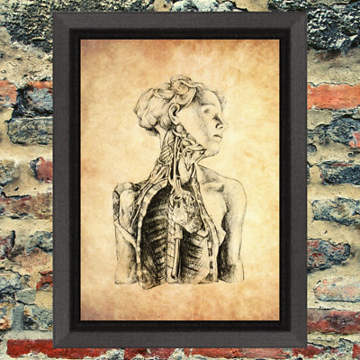 Ancient Art Print  Occult Antique Effect Historic Curio Weird Medical Anatomy
