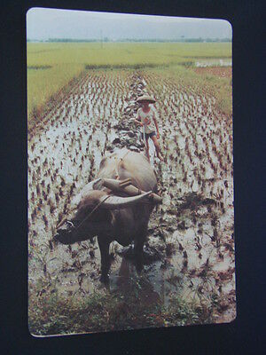 Ploughing Scenery People's Republic Of China Postcard