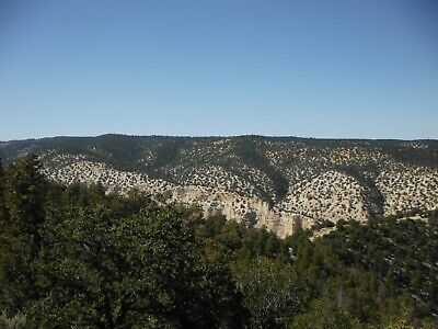 10 Forested Acres Duchesne Utah Views Tall Trees Private Cash Sale