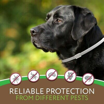 Natural Flea Collar For Dogs Cats - Flea and Tick Protection For Up to 8 Months