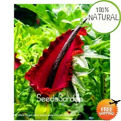 Loss Giant Lily Seeds Plants Voodoo Potted Bonsai Courtyard Garden 100pcs/bag