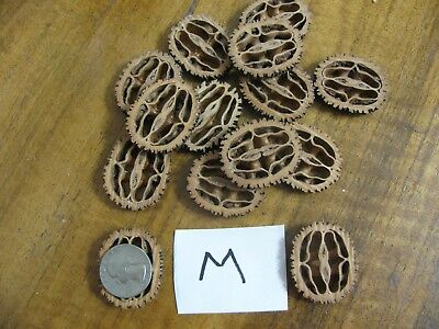 25 Quality Medium Black Walnut Slices for Your Basket Making or Other Projects