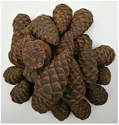 """3.5"""" High Small Ceramic Imitation Pine Cones for Gas ethanol Fireplaces,Firepits"""