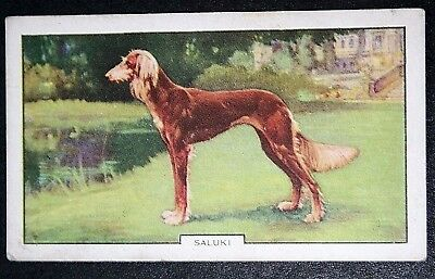 SALUKI     Original 1930's Vintage Coloured Card # CAT E