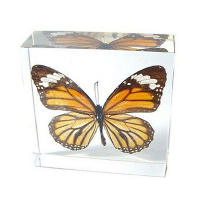REAL Monarch Butterfly Paperweight: Clear Acrylic Specimen Display