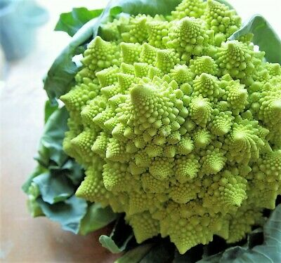 500 Organic ROMANESCO BROCCOLI Broccoflower Cauliflower Brassica Vegetable Seeds