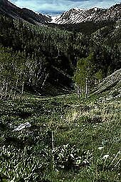 BUY ALL TRACTS TOGETHER 10.35 Acres 2198 EAST 1539 NORTH,NV NO RESERVE!