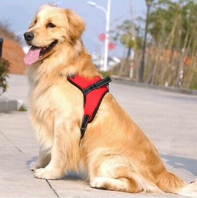 Dog Harness Puppy No Pull Adjustable Pet Vest Chest Strap with Handle S/M/L/XL