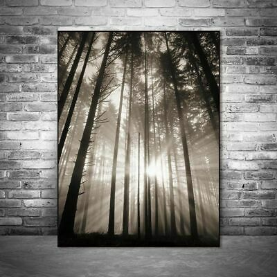 Wall Pictures Sun Forest Nordic Poster Hope Living Room Landscape Art Decoration