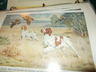 Walter A. Weber Brittany Spaniel bookplate 1947 National Geographic Magazine