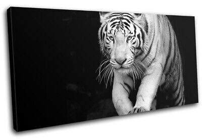 Wild Tiger White Siberian Bengal Animals SINGLE CANVAS WALL ART Picture Print