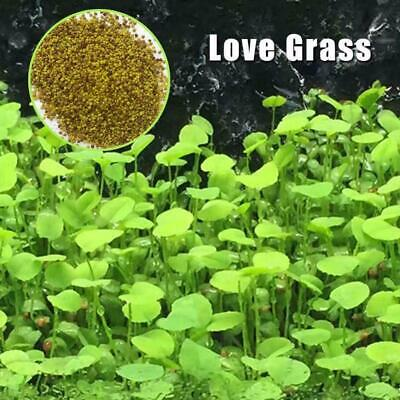 Fish Tank Plant Seeds Aquarium Aquatic Water Plant Grass Garden Foreground NEW F